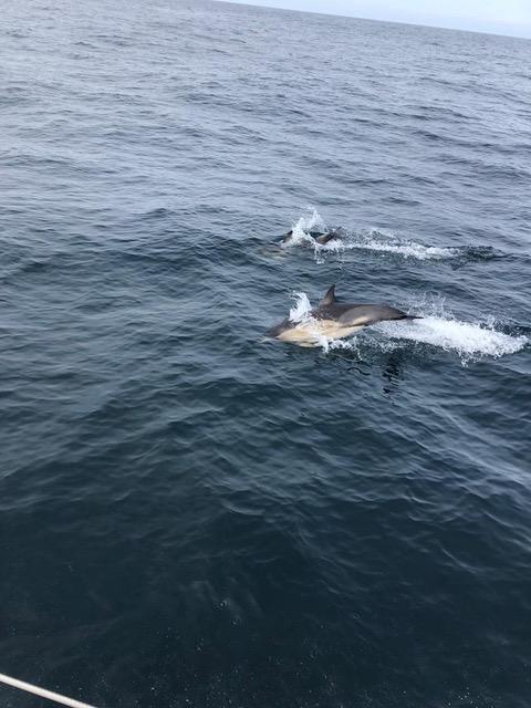 Dolphins near Tiree